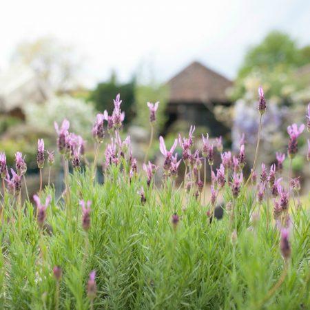 Petersham Nuseries - Springtime - Humphrey Munson Blog