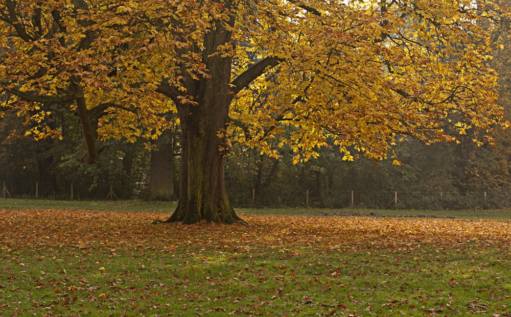 Hylands Park - Autumn Walk - Humphrey Munson Blog