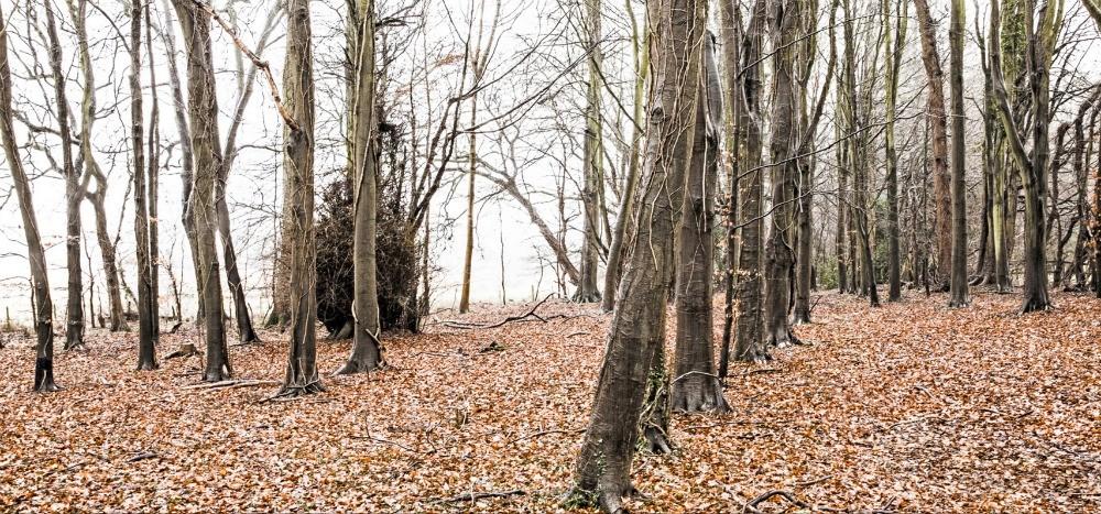 The Wild Rabbit - Kingham - Autumn - Humphrey Munson Blog