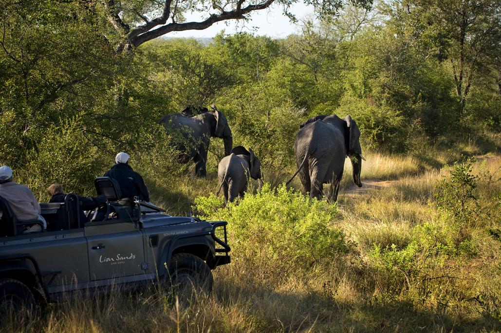 lion-sands-safari-humphrey-munson-blog-1