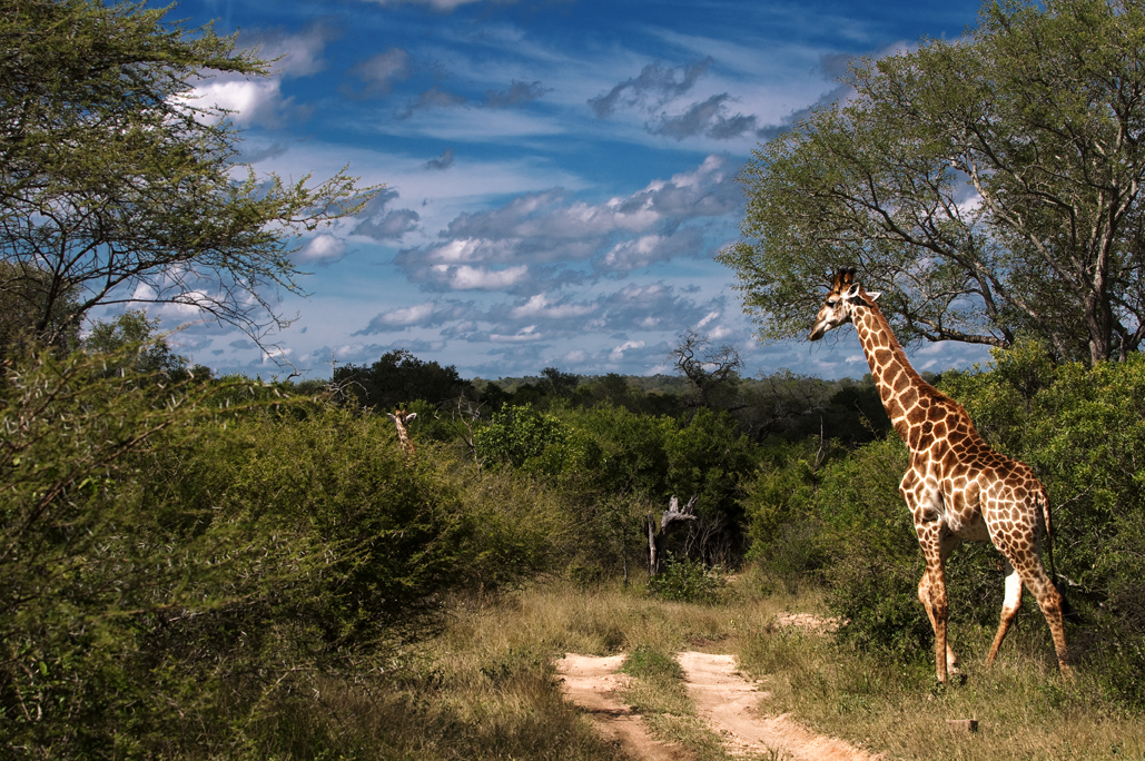 lion-sands-safari-humphrey-munson-blog-2