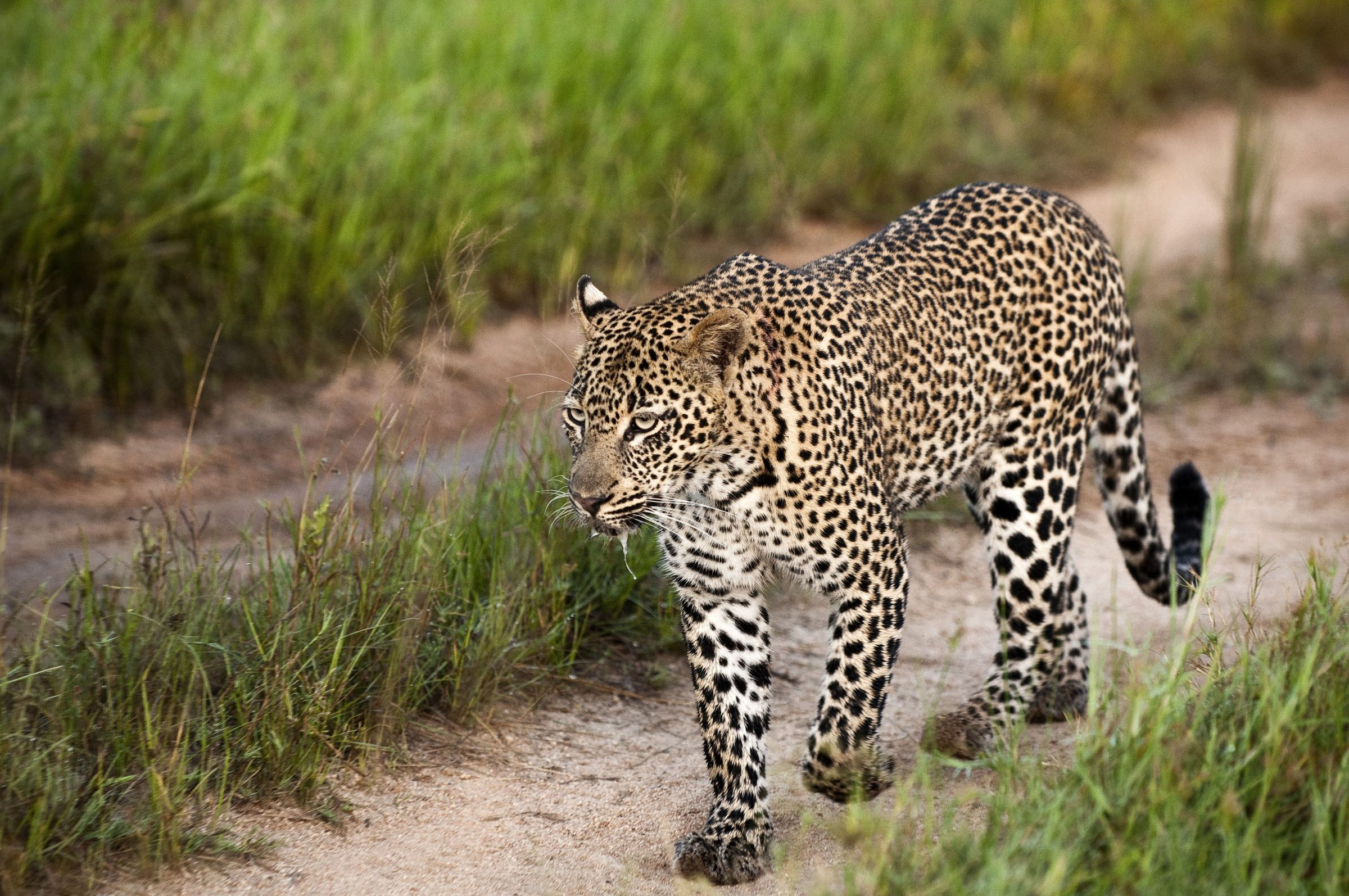 lion-sands-safari-humphrey-munson-blog-3