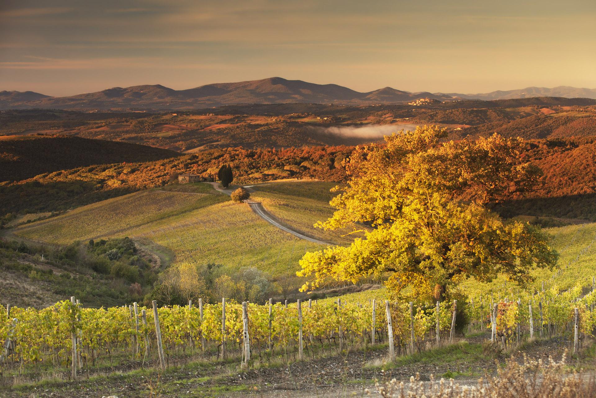 Castiglion del Bosco - A Tuscan Retreat - Rosewood - Humphrey Munson