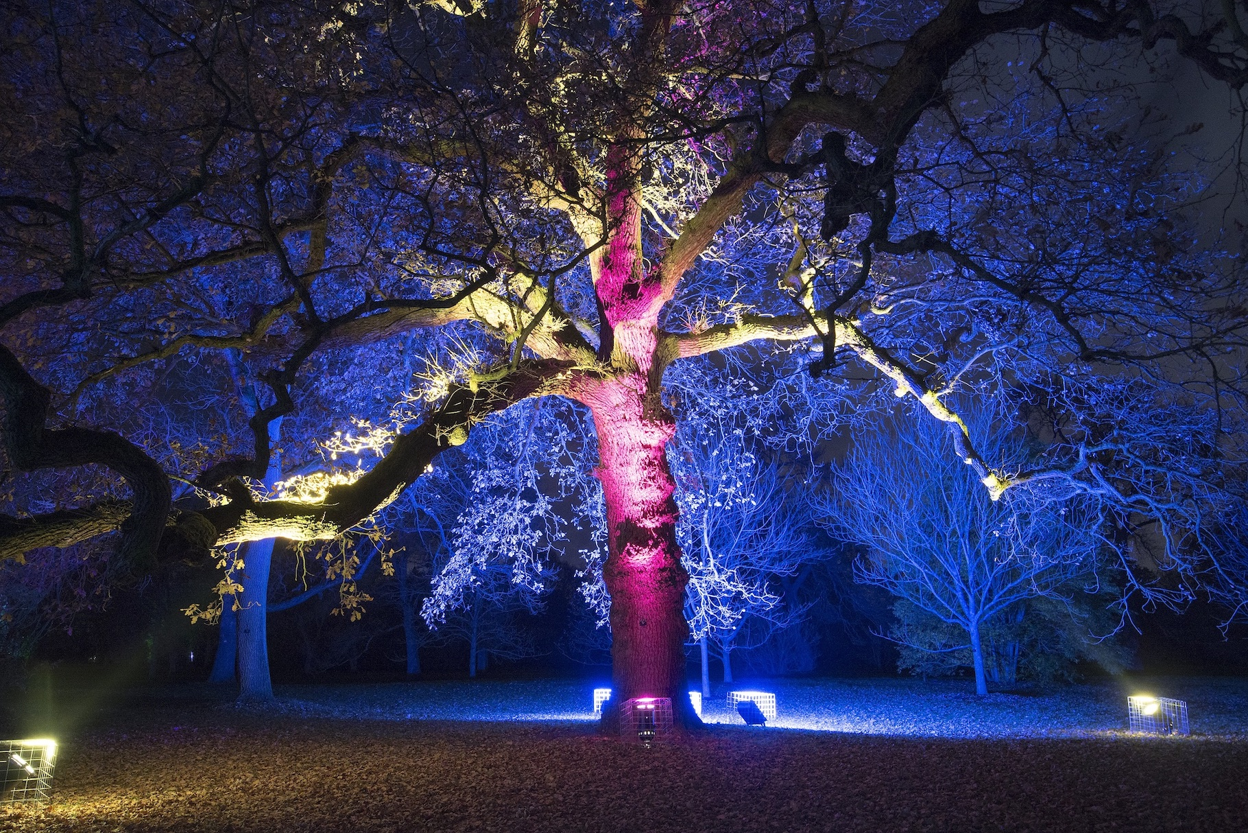 Kew Gardens | Light Trail