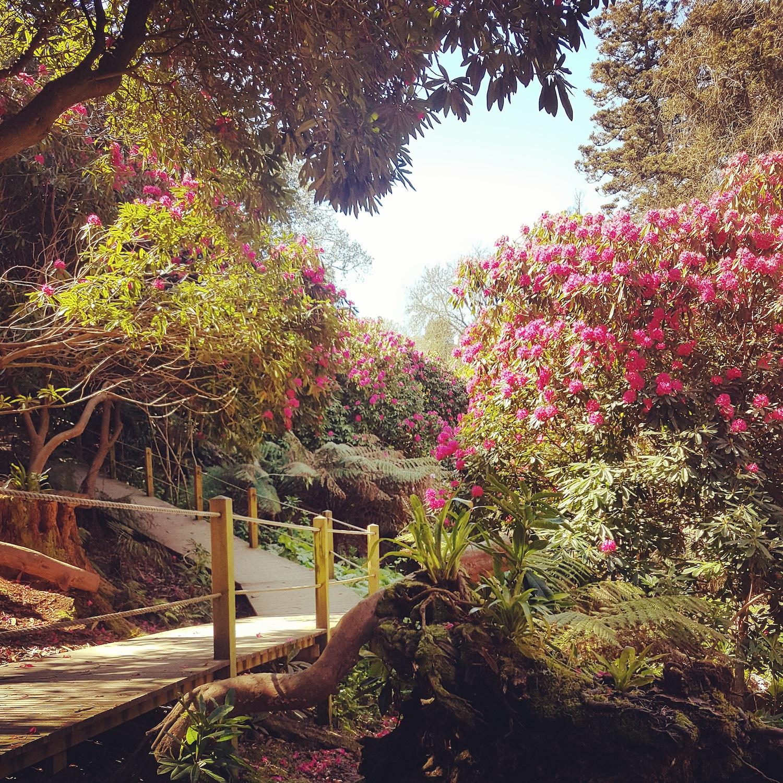 The Lost Gardens of Heligan - Jungle - Humphrey Munson Blog