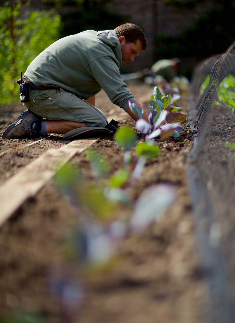 Lost gardens of Heligan - Cornwall - Humphrey Munson Blog
