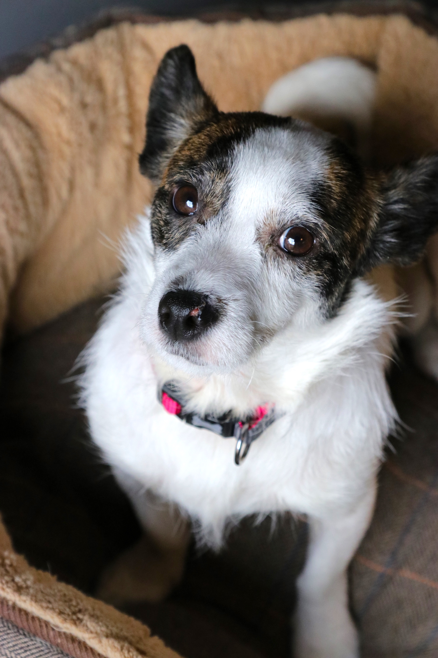 Daisy - rescue dog - Humphrey Munson Blog